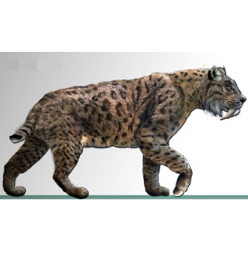 Smilodon fatalis reconstruction